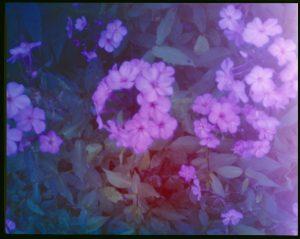 colour flowers pinhole